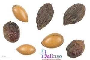 www.balinso.com